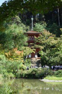 浄瑠璃寺の三重塔と庭園